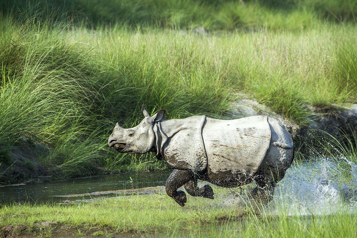 jungle-safari-nepal